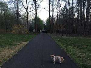 A cool evening walk with Bruiser.